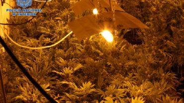 La Policía Nacional desmantela en Granada una nave industrial dedicada al cultivo de marihuana a gran escala