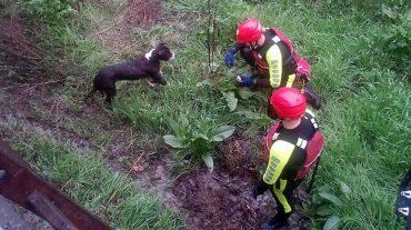 El equipo de rescate del cuerpo de Bomberos socorre a un perro arrastrado por el río a la altura de la Colonia de San Sebastián