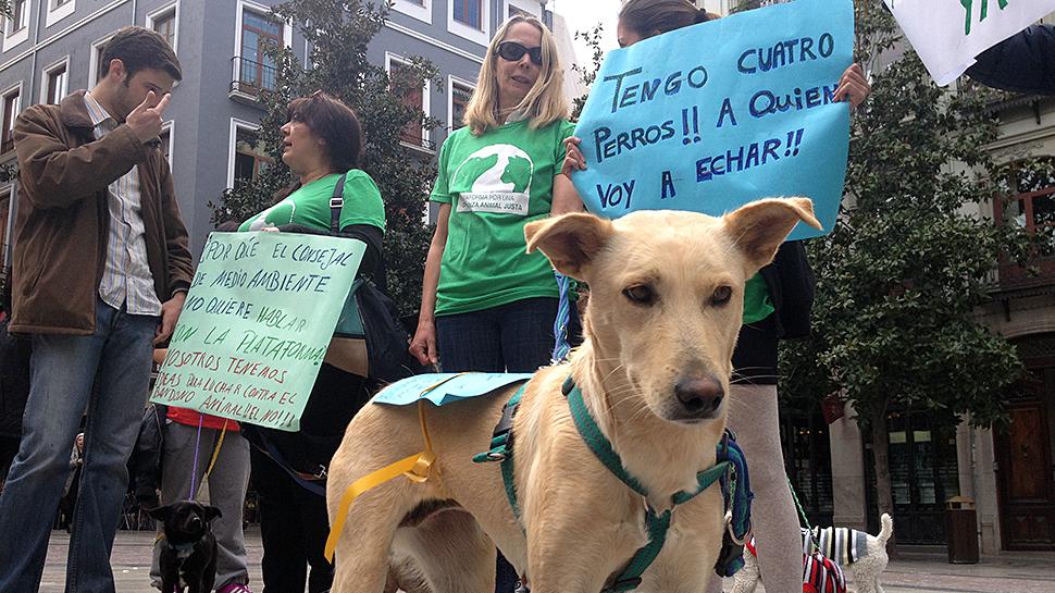 """Insisten en """"mejorar"""" la ordenanza animal municipal"""
