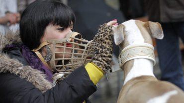 Granada pide a la Junta que no obligue a que los perros de más 20 kilos tengan que llevar bozal