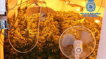 Detenida una persona y desmantelado un invernadero 'indoor' de marihuana