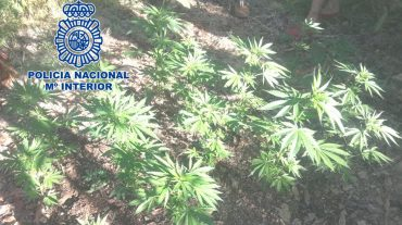 Desmantelada una plantación de marihuana en el ecoparque de la zona norte