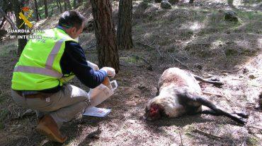 Desarticulado un grupo organizado dedicado a la caza furtiva en Granada y Jaén