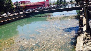 """Cuenca exige al PP la limpieza """"inmediata"""" del río Genil"""