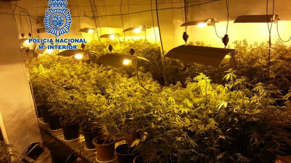 Ahora granada desmantelado un 39 punto negro 39 de cultivo for Cultivo interior marihuana