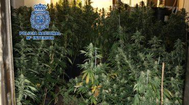 Un incendio destapa un cultivo ilegal de marihuana