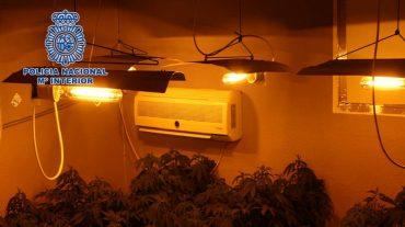 Desmantelada una vivienda utilizada para el cultivo intensivo de marihuana