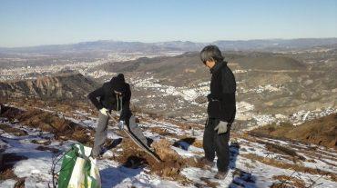 Repoblan con unas 4.000 bellotas de encina la zona afectada por el incendio en Cenes