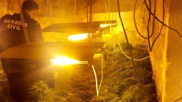 Descubren 766 plantas de marihuana en cuatro viviendas de Pinos Puente