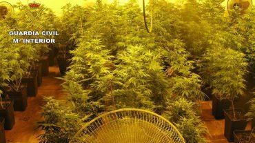 Descubren 316 plantas de marihuana en Fuente Vaqueros