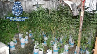 Intervenidas armas, munición y 71 plantas de marihuana en un domicilio de Motril