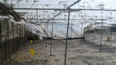 Cooperativas Agro-alimentarias de Granada apoya enla declaración de los daños por las lluvias
