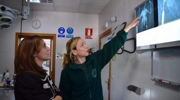 Más de 300 animales silvestres atendidos en el Centro de Recuperación de Especies Amenazadas en Pinos Genil
