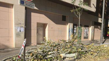Exigen la retirada inmediata del árbol caído hace más de una semana en Gonzalo Gallas