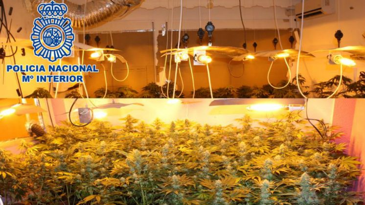 Policía Nacional Marihuana
