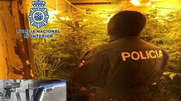 Detenidas 14 personas y desmanteladas 19 plantaciones 'indoor' de marihuana en viviendas