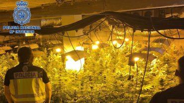 Detenidas tres personas y desmantelada una plantación de cannabis en una finca de Motril