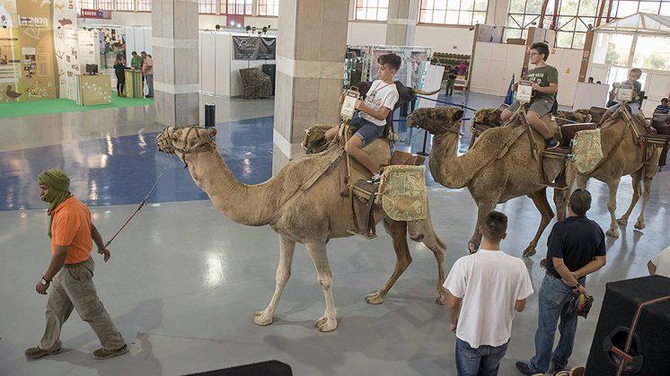 Los paseos a camello son uno de los atractivos de la feria. Foto: aG
