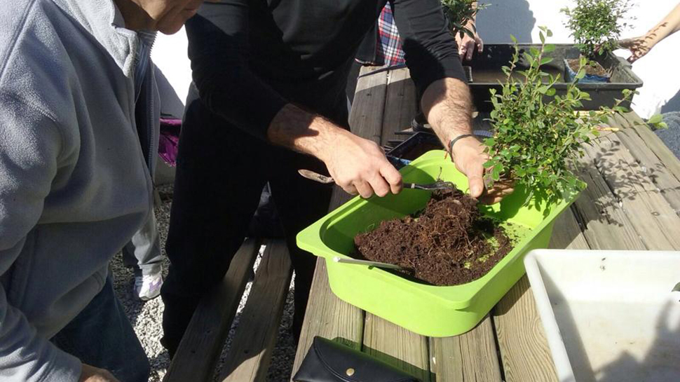Ahora granada c mo cultivar tu propio bons i ahora granada - Como cultivar bonsais ...